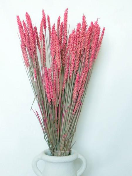 Weizen/ Rosa, ein halbes Bund, Z615a