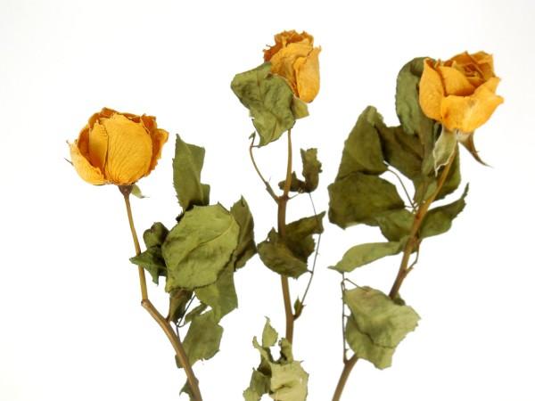 Gelbe Edelrose mit Stängel, 35cm