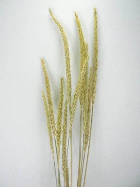Ziergras, Naturgrün, 60cm