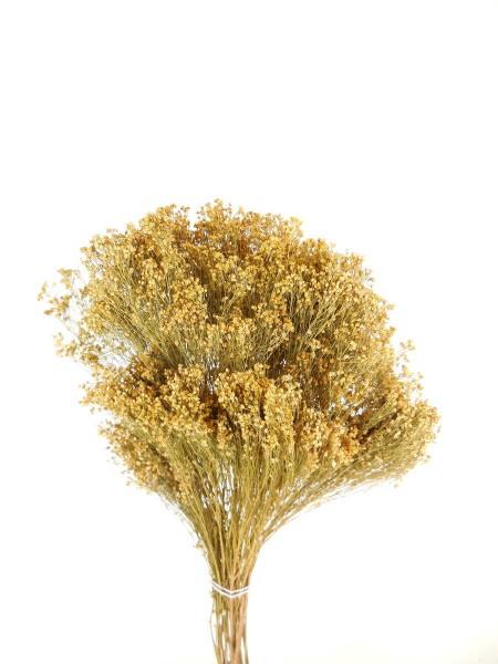 Broom Bloom, Naturfarben, 50cm
